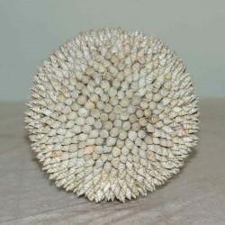 Esfera de Caracoles
